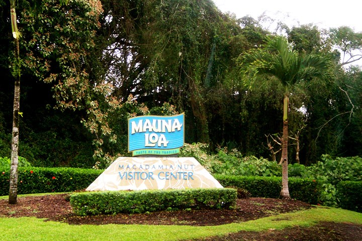Macadamia Nut Farm On The Big Island Hawaii Com